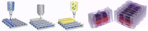 biofab figure 1